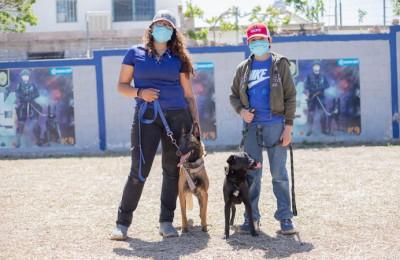 Caninos apoyan en vigilancia de transporte público en Cuauhtémoc